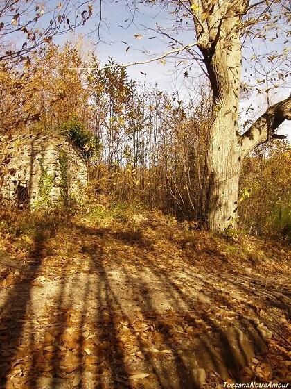 Осень. Каштаны