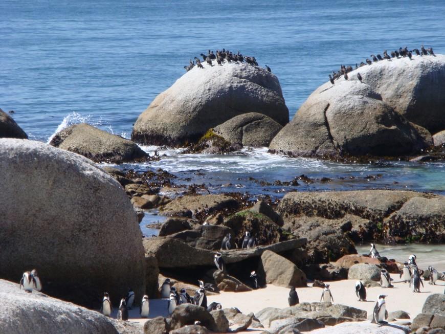 Пингвины. Захватили территорию у деревни и освоились.