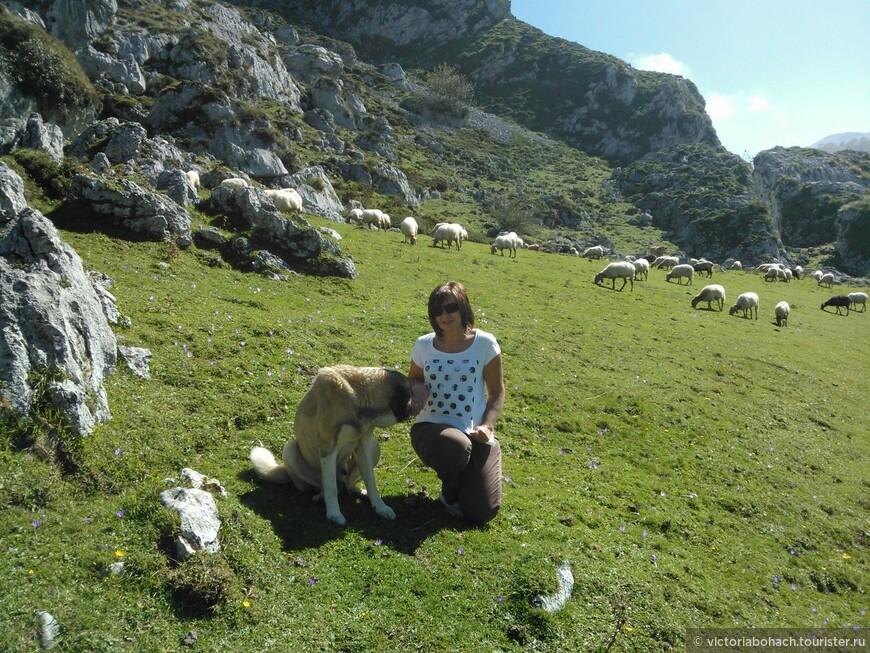 Знакомство с пастухом. Было очень любопытно наблюдать как этот пес управляется с целым стадом овец)