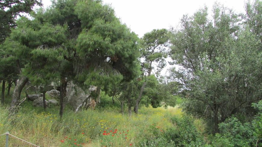 Как сама Агора, так и склоны холма по направлению к ней представляют собой настоящий парк. Здесь много цветов, сосен и олив. А туристов, по сравнению с Акрополем, напротив, гораздо меньше.