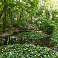 Совершенно случайно набрели на пруд с лилиями. Чем не сказка Венского леса?