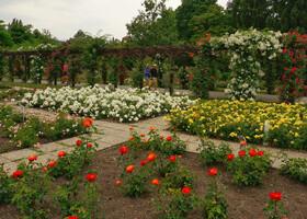Розарий в  Бадене - крупнейший в Австрии.  На  175 клумбах, на более чем 30000 кустов роз цветут 600 сортов роз со звучными именами, такими как «Королева  сказок», «Золотая Мэри» и «Императрица Елизавета».