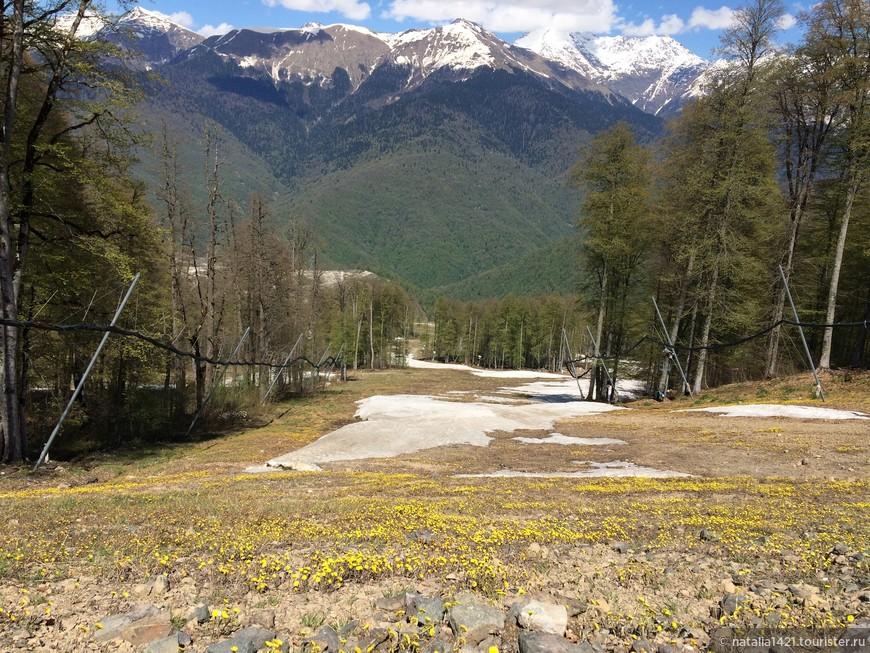 Бывшая лыжная трасса на высоте 1350 м. Снежное покрытие меняется на мать-и-мачеховое