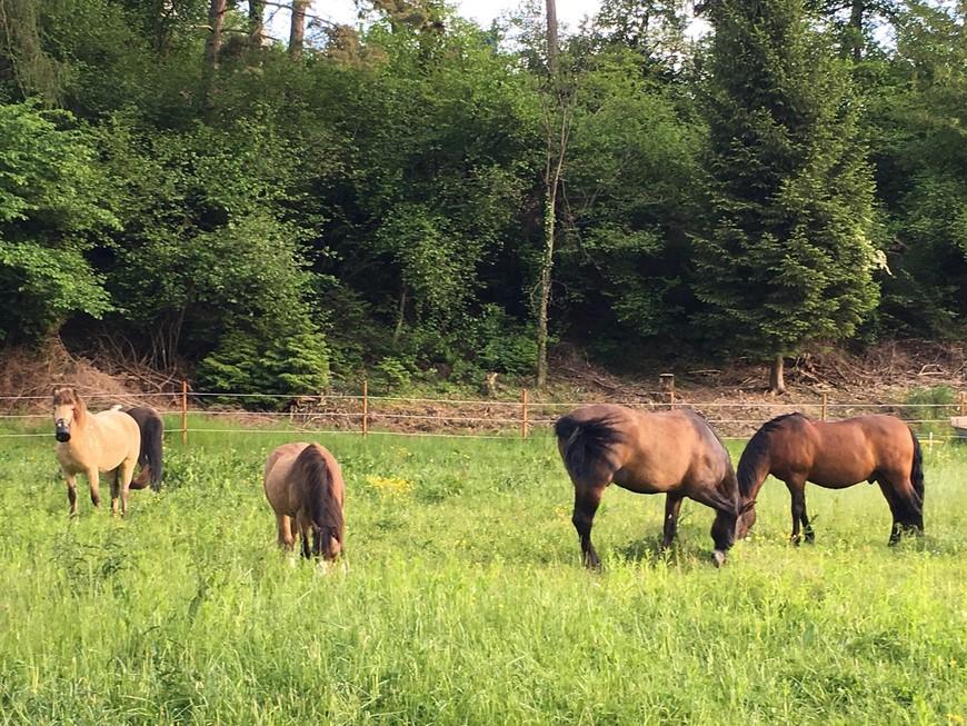 В Швейцарии не только коров можно увидеть. Водятся здесь и лошади.