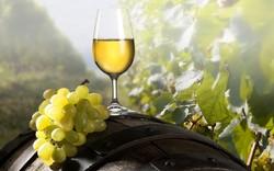 В Крыму не будут лечить вином