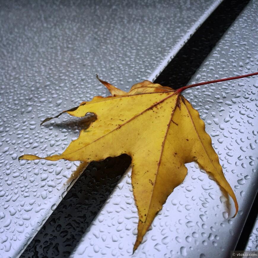 Эстетика японской осени. В Японии даже дождь представляет собой особенное и необычайное зрелище. Главное иметь правильный настрой, капельку меланхолии, капельку любви к прекрасному.
