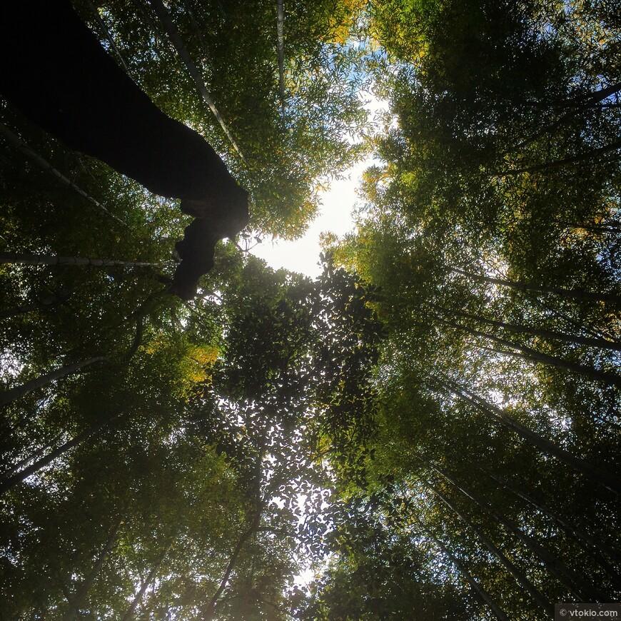 Бамбуковая роща при храме Тэнрюдзи.  Желаю всем туда попасть в более спокойный период, когда не так много народа, если это конечно возможно в Киото.