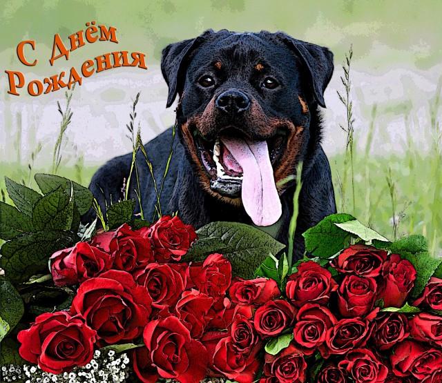 Картинки с днем рождения собачку, обиженного мужа полная