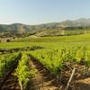 Долина Касабланка в Чили