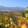 Виноградники долины Касабланка в Чили