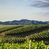 Пейзаж винной долины в Чили
