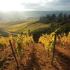Осень на виноградниках в Чили