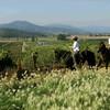 Экскурсия по виноградникам в Чили