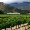 Весна на виноградниках в Чили