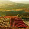 Осень и разные сорта винограда в Чили