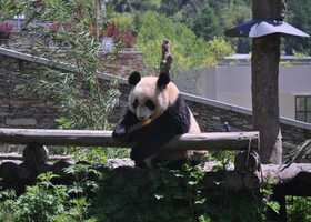 Уолун панда база открыта.