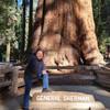 Крупнейшее живое существо на Земле секвойя «Генерал Шерман»