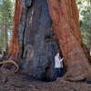 В этих местах можно прикоснуться к старейшим деревьям на земле