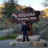Секвойя - Национальный Парк старейших живых существ на Земле