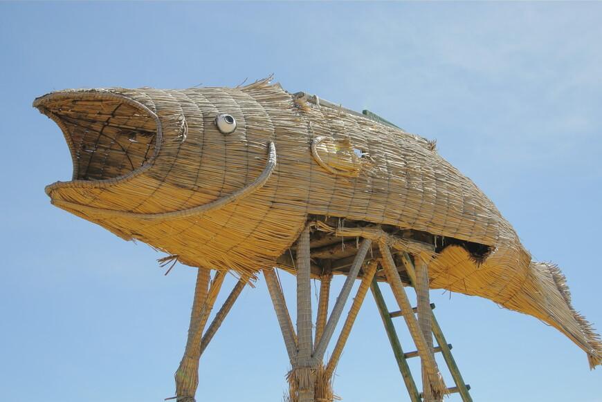Типичный представитель фауны озера Титикака.
