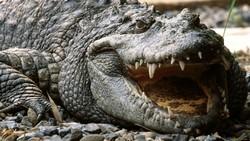 Из-за наводнения крокодилы, сбежавшие из зоопарка, расползлись по Парижу