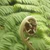 Экскурсия по животным и природе тропической Австралии из Кернса с русским гидом
