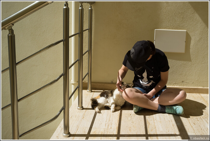 Дана и местная кошка.
