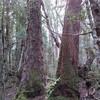 Многодневные Туры по Тасмании с русским гидом Сергеем Яшумовым