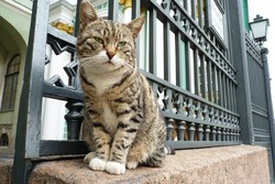 Коты Эрмитажа - в рейтинге самых необычных достопримечательностей мира