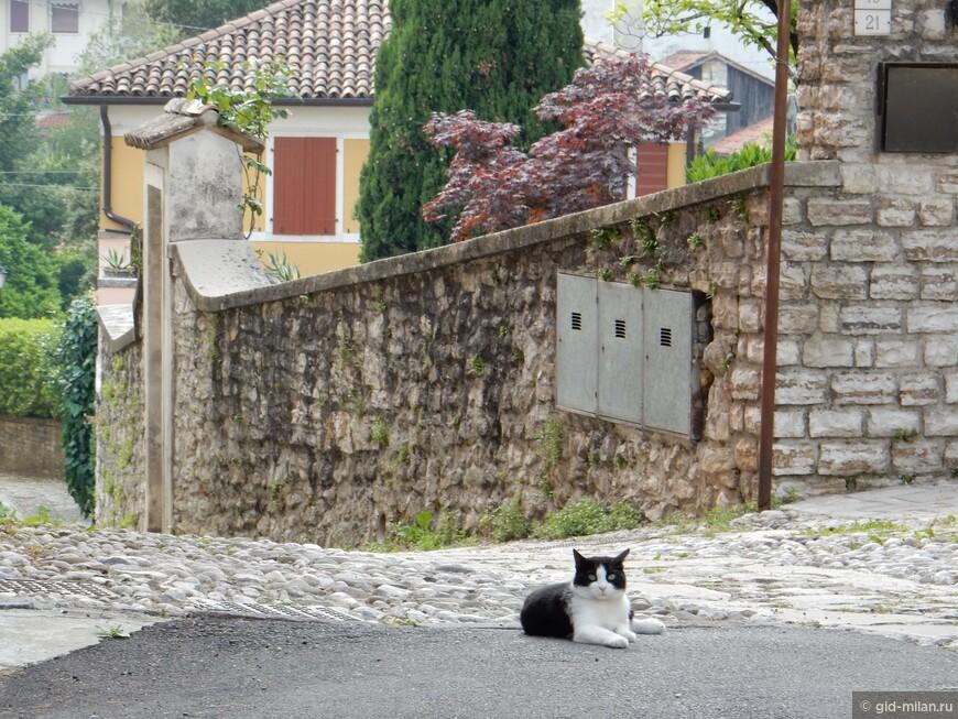 Любители кошек меня поймут. Ни одна поездка без фото местного усатого-полосатого.