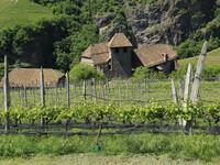 Замок Ронколо и виноградники.