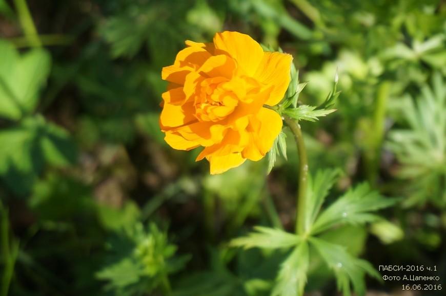 Красивый цветок...