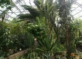 Полярно-альпийский ботанический сад. Часть 2