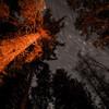 Corona forestal ночью.