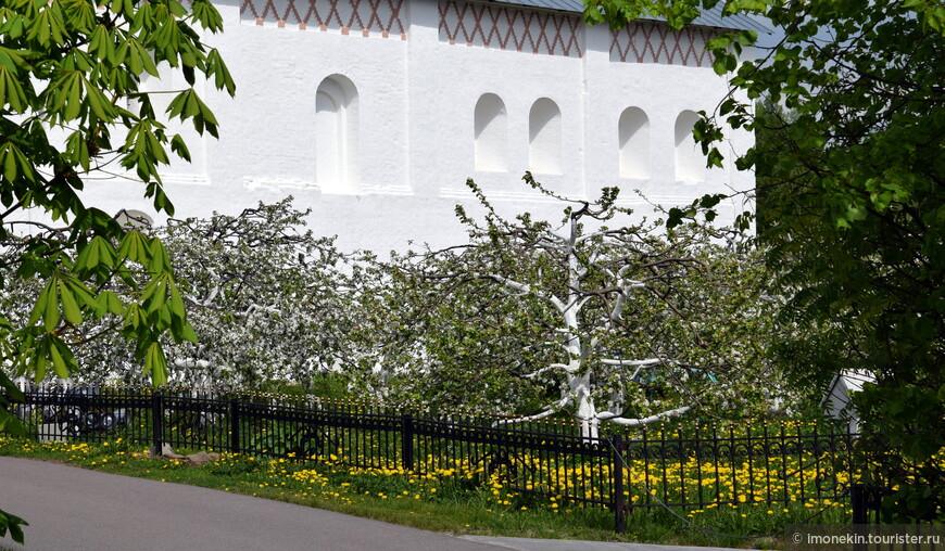 Потрясающий яблоневый сад в Покровском монастыре