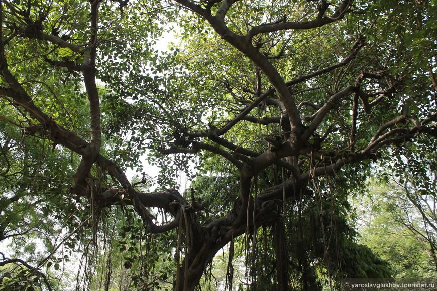 Вот такой большой интересный исторический комплекс мавзолеев есть в Дели.