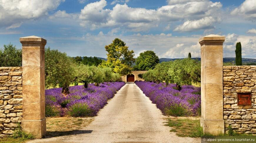 представьте: вы прогуливаетесь по фиолетово-синему облаку лавандовых полей, ваши легкие наполняются чистейшим горным воздухом, вы проводите рукой по цветущим кустам и аромат лаванды окутывает вас сладким одеялком.. Прекрасный сон, который с нами станет явью и останется в вашей памяти надолго