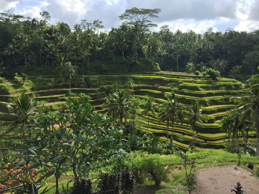 Самостоятельное путешествие по Бали, отзыв от туриста Olga_Selivanova на