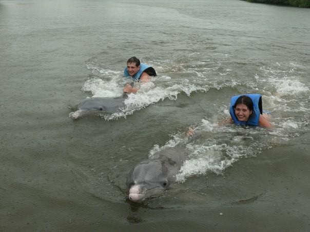 купание с дельфинами , ощущения не вероятные