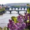 Все красоты Златой Праги. Большая обзорная авто-пешеходная экскурсия. Мосты Праги. Экскурсии с частным индивидуальным гидом по Праге.