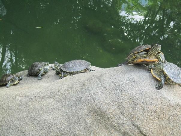 В гонконгском парке