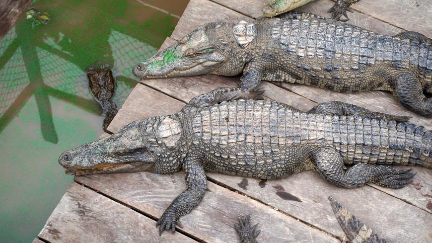Небольшая крокодиловая ферма  - тоже, конечно, на воде.