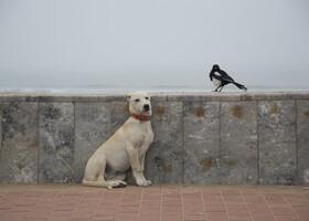 Пёс, Сорока и батон в Марокко