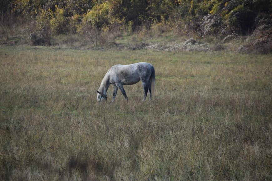 А еще лошади