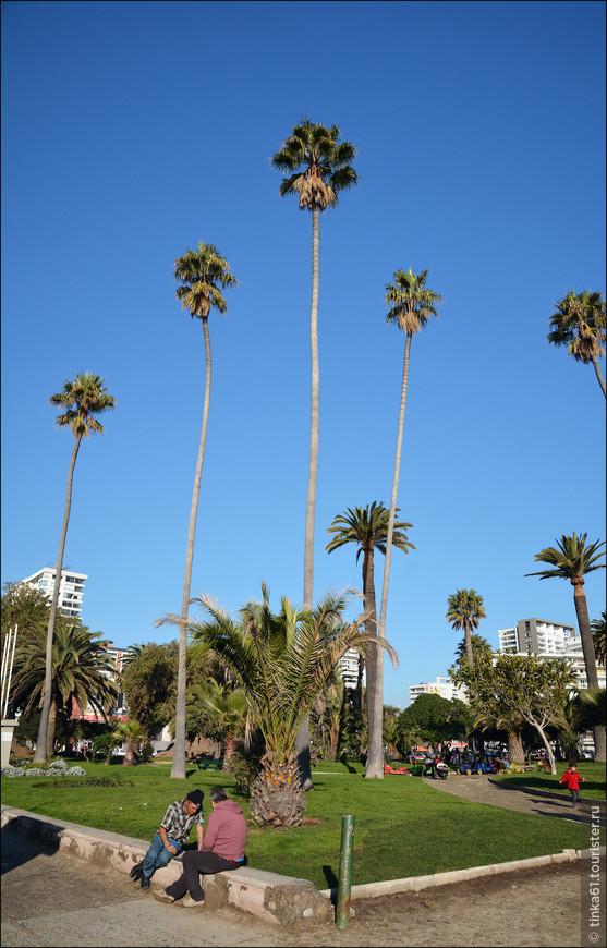 Пальмы почти как в Каннах.