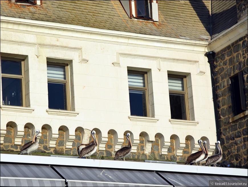 Пеликаны  и тут как тут.