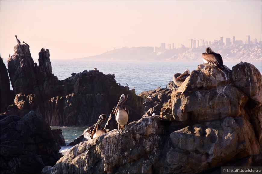 Типичные морские пейзажи Центрального побережья Чили.