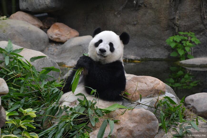 Панда из Оушен Парка