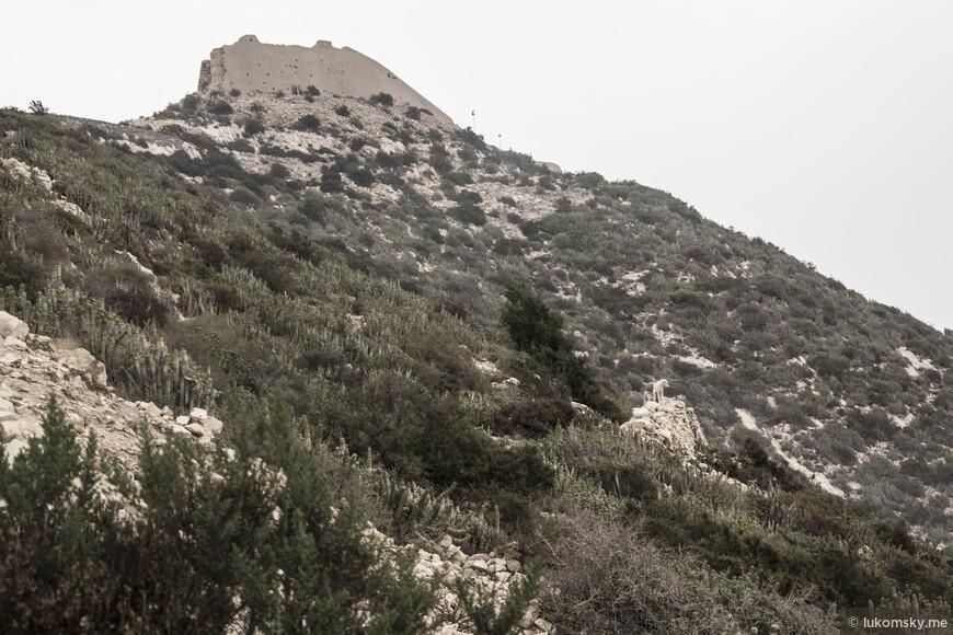 Агадир. Старая крепость. Местная собака Баскервилей