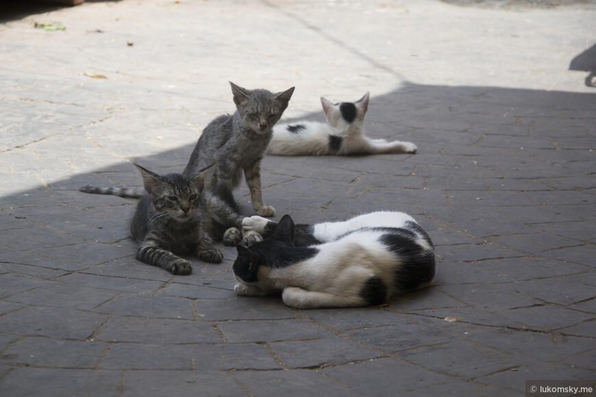 Агадир. Рынок. Полно бездомных котов, а собак почти нет.